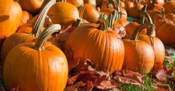 Pumpkin_Patch_0