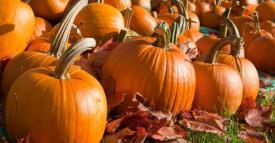Pumpkin_Patch_0
